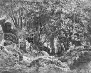 Валаам. Лес на камнях — Иван Шишкин