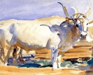 White Ox at Siena — Джон Сингер Сарджент