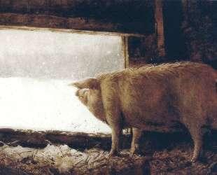 Winter Pig — Джейми Уайет