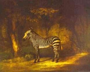 Zebra — Джордж Стаббс